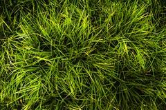 A grama no campo, folha é muita linha imagem de stock
