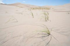 Grama no grande parque nacional de dunas de areia em Colorado Imagem de Stock Royalty Free