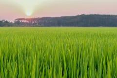 A grama no grassfiled é beleza e gotas de água Fotos de Stock Royalty Free
