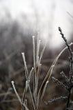 Grama no inverno Fotos de Stock