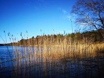 Grama no lago imagens de stock royalty free