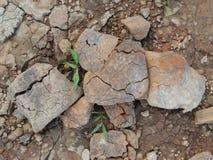 Grama no verão seco da terra Foto de Stock Royalty Free