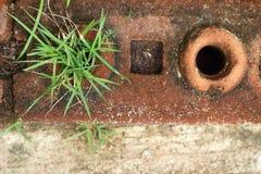A grama ou as plântulas que emergem naturalmente Imagem de Stock