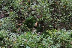 Grama Paisagem com grama na floresta imagens de stock