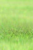 Grama pequena no sward verde Imagem de Stock
