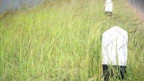 A grama perto do reservatório filme