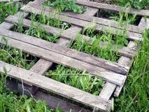 Grama que cresce através das pranchas de madeira Fotografia de Stock