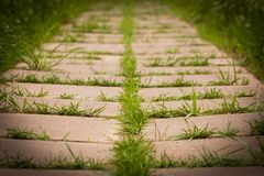 Grama que cresce nas telhas no parque fotografia de stock royalty free