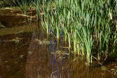Grama refletida em uma lagoa Fotos de Stock