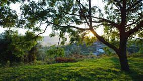 Grama rica brilhante e vista panorâmica da vila em Montenegro No primeiro plano, no tronco de árvore e nos raios do ` s do sol imagens de stock royalty free