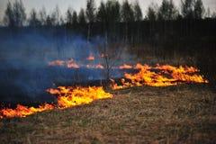 Grama seca ardente no campo imagem de stock