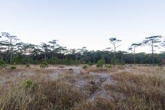 Grama seca com geada e floresta Foto de Stock