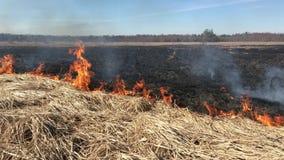 Grama seca de queimadura na primavera no campo video estoque