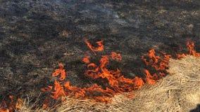 Grama seca de queimadura na primavera no campo filme