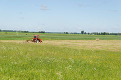 Grama seca do feno vermelho de ted do trator no campo da agricultura Imagens de Stock