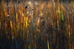 Grama seca do outono da textura Fotos de Stock Royalty Free