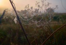 Grama seca e teia de aranha em gotas de orvalho imagens de stock royalty free