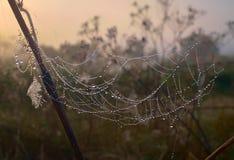 Grama seca e teia de aranha em gotas de orvalho perto acima foto de stock royalty free