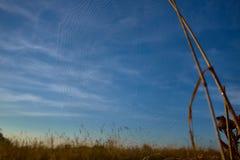 Grama seca e teia de aranha em gotas de orvalho perto acima imagens de stock royalty free