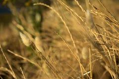 Grama seca em um campo Imagens de Stock