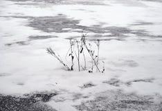 Grama seca em um fundo nevado foto de stock royalty free