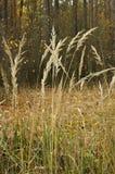 Grama seca na floresta Fotos de Stock Royalty Free