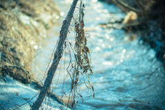 Grama seca na mola adiantada em um dia ensolarado Fotos de Stock Royalty Free
