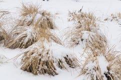 Grama seca nevado no inverno imagens de stock