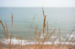 Grama seca, praia, canal inglês fotos de stock