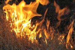 Grama seca que queima-se com incêndio violento Foto de Stock Royalty Free