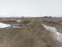 A grama seca, restos da neve, carneiro anda, casa só na distância, montanhas brancas de A, estações, agricultura Imagem de Stock Royalty Free