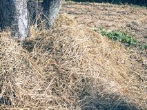 Grama seca sob a árvore foto de stock royalty free