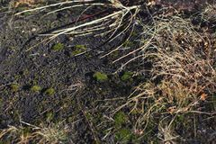 A grama secada-acima na terra fotografia de stock