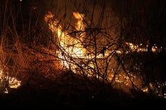 Grama secada de queimadura Fotografia de Stock Royalty Free