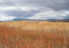 Grama secada em um campo com nuvens de tempestade em cima fotografia de stock royalty free