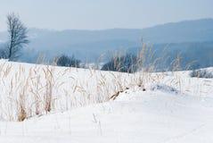 Grama selvagem secada em um dia de inverno brilhante Imagem de Stock