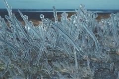 Grama sob o gelo Fotos de Stock Royalty Free