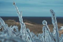 Grama sob o gelo - chuva gelada Fotografia de Stock Royalty Free