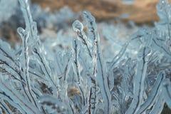 Grama sob o gelo - chuva gelada Imagens de Stock Royalty Free