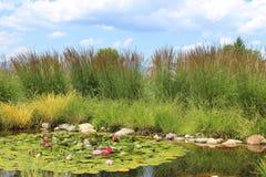 Grama tranquilo da água e paisagem de florescência das flores fotografia de stock