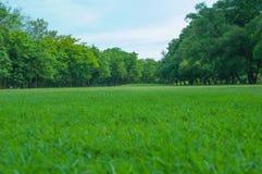 Grama verde, árvore no patk Imagens de Stock