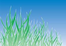 Grama verde Imagens de Stock Royalty Free