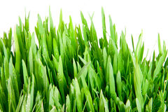 Grama verde Fotografia de Stock Royalty Free