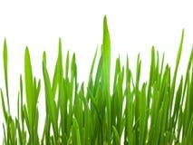 Grama verde. Foto de Stock