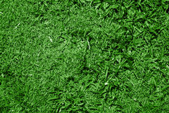 Grama verde fotos de stock royalty free
