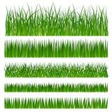 Grama verde foto de stock