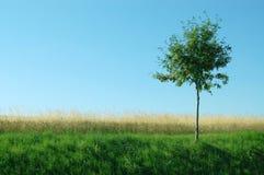 Grama verde, amarela, árvore, o céu azul Imagem de Stock Royalty Free
