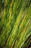 Grama verde Backgound Foto de Stock Royalty Free