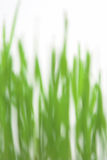 Grama verde blured Fotografia de Stock