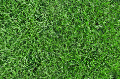 Grama verde bonita Foto de Stock
